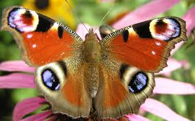 cool butterfly background free download