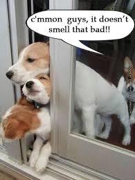 Bad Dog Meme - a bad dog fart funniest pictures