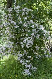 arbuste feuillage pourpre persistant inventaire arbres et arbustes pour un jardin de montagne jardin
