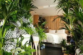plante pour chambre plante verte pour chambre a coucher 37916 sprint co