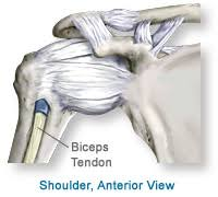 Basic Shoulder Anatomy Anatomy Of The Shoulder Southern California Orthopedic Institute