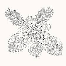 coloring pictures of hibiscus flowers vector hibiscus flower and leaves stock vector illustration of