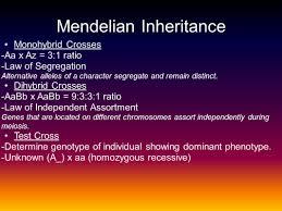 review 4 heredity u0026 molecular genetics ap biology ppt download