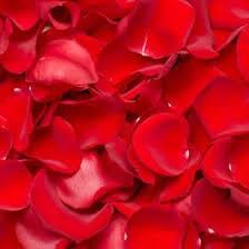 real petals globalrose 5000 fresh petals real petals with fast