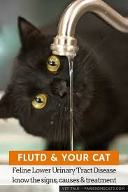 67 best cat info images on pinterest cat health pet care and