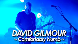 David Gilmour Comfortably Numb David Gilmour Pink Floyd Comfortably Numb At Gdansk 2006 By