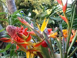 big island hawaii bed u0026 breakfast inn dragonfly ranch eco b u0026b