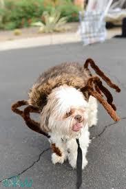 best 20 spider costume for dogs ideas on pinterest dog spider