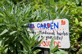 flower gardening 101 garden and urban agriculture tools u0026 guides u2013 dug network