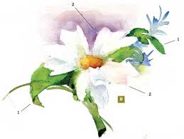 how to paint a watercolor floral still life step by step artist