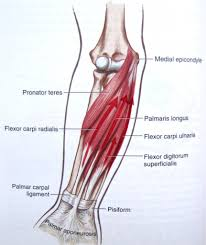 Apologia Human Anatomy And Physiology Anatomy Of Human Hand And Wrist Image Collections Learn Human