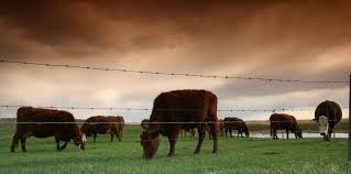 what u0027grass fed u0027 labels on beef actually mean business insider