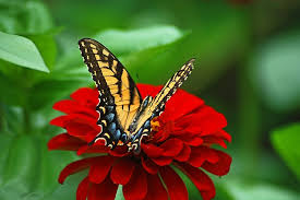 beautiful butterfly on domain free photos for