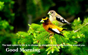 desktop morning beautiful nature pickcom with pictures hd