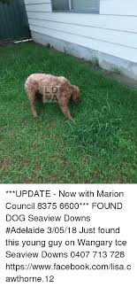 l d update now with marion council 8375 6600 found dog