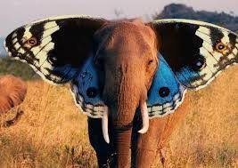 19 best butterfly elephant images on elephants