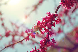 Flower Pictures Flower Blossom Quotes Like Success