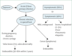 natural history and pathophysiology of q fever the lancet