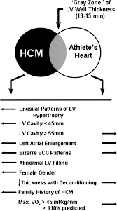 Heart Anatomy And Function The Heart Of Trained Athletes Circulation