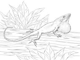 Lizards Coloring Pages Free Coloring Pages Free Colouring Pages