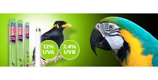 uv light for birds arcadia bird l 18 450mm x 26mm 15w t8 livefood uk ltd
