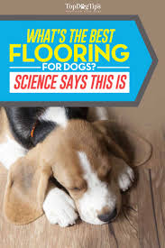 Best Flooring With Dogs Best Flooring For Dogs 7 Types For Health And Safety Based On