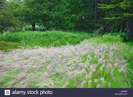 ornamental grasses and trees line paths and walkways throughout