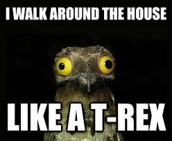 Potoo Bird Meme - real monstrosities potoo