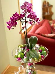 10 easy to grow orchids