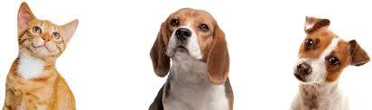 Pet Pet Insurance Find U0026 Compare Quotes Argos Pet Insurance