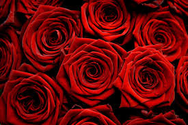 flower delivery minneapolis floral delivery minneapolis delivery flower
