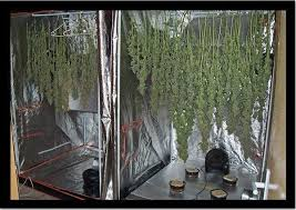 chambre de sechage cannabis de la dans ta box non tu ne rêves pas openminded