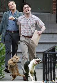 Leonardo Dicaprio Walking Meme - leonardo dicaprio daniel radcliffe and pets by azurehaseo meme