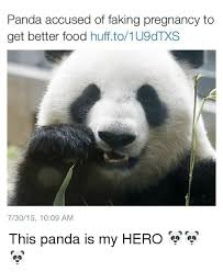Funny Panda Memes - panda accused of faking pregnancy to get better food huffto1u9dtxs