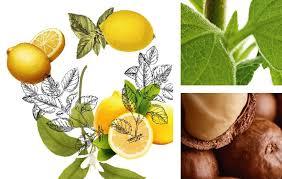 siege yves rocher yves rocher 10 ans de cosmétique végétale cba designing brands