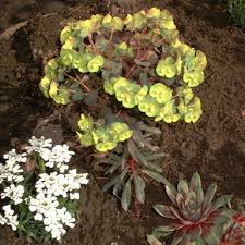 Best Plants For Rock Gardens Plants For Rock Gardens Images And Photos Objects Hit Interiors