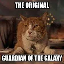 Cat Alien Meme - monday 20 03 2017 tdk caf礬 goes beyond earthly constraints