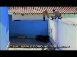 american pitbull terrier in bangalore pit bull kills owner in brazil youtube