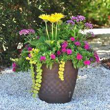 Container Vegetable Gardening Ideas Container Garden Ideas Elcorazon Club