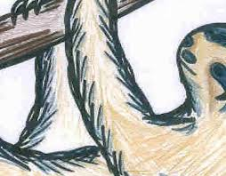 toed sloth coloring rainforest alliance