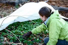 Winter Gardening Ideas Winter Gardening Tips Ideas