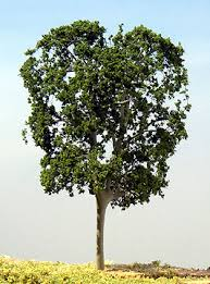 samtrees we supplies best quality miniature model trees scenery