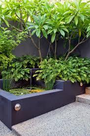 ideas for the garden my garden australian garden tropical