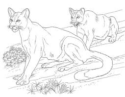desert animals coloring pages mountain lion bebo pandco