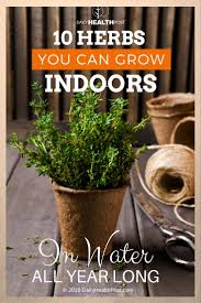 Grow Herbs Indoors by Growing Herbs Indoors 10 Varieties To Grow In Water All Year Long