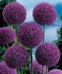 best 25 purple plants ideas on pinterest flowers garden leaves