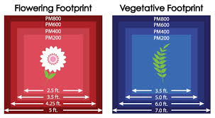 1000 watt led grow light reviews black dog phytomax 200 400 600 800 1000 watt led grow light review