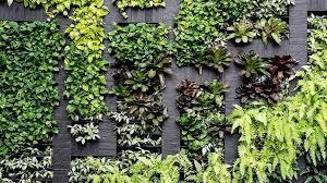 vertical gardens how to grow a vertical garden at home