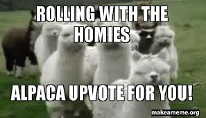 Alpaca Sheep Meme - useless meme contest alpaca theme steemit