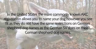 australian shepherd female names german shepherd dog names youtube